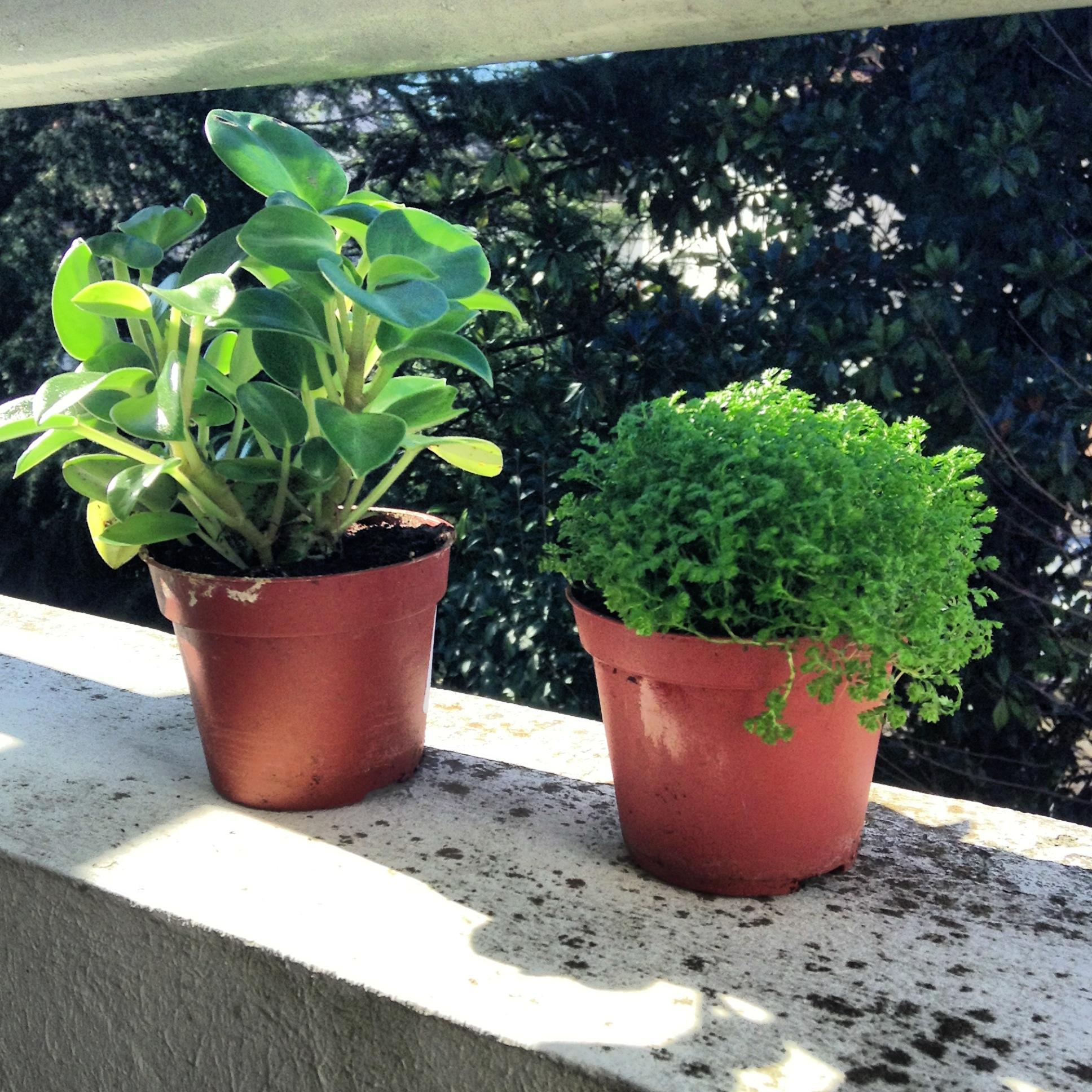 plantes vertes charlie les yeux bleus On recherche sur les plantes vertes